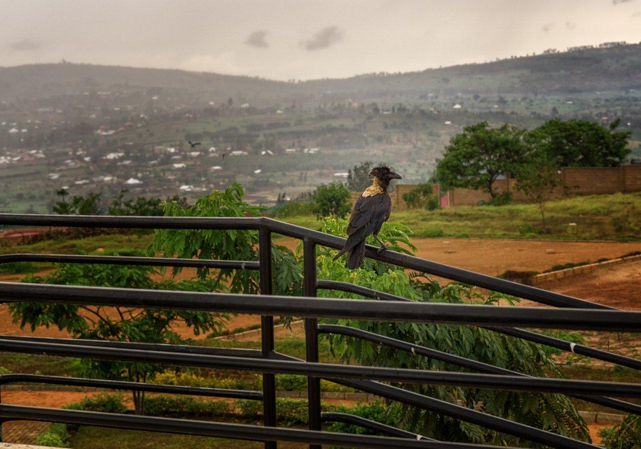 Epizoda 14: Sećanje na genocid u Ruandi (in English)
